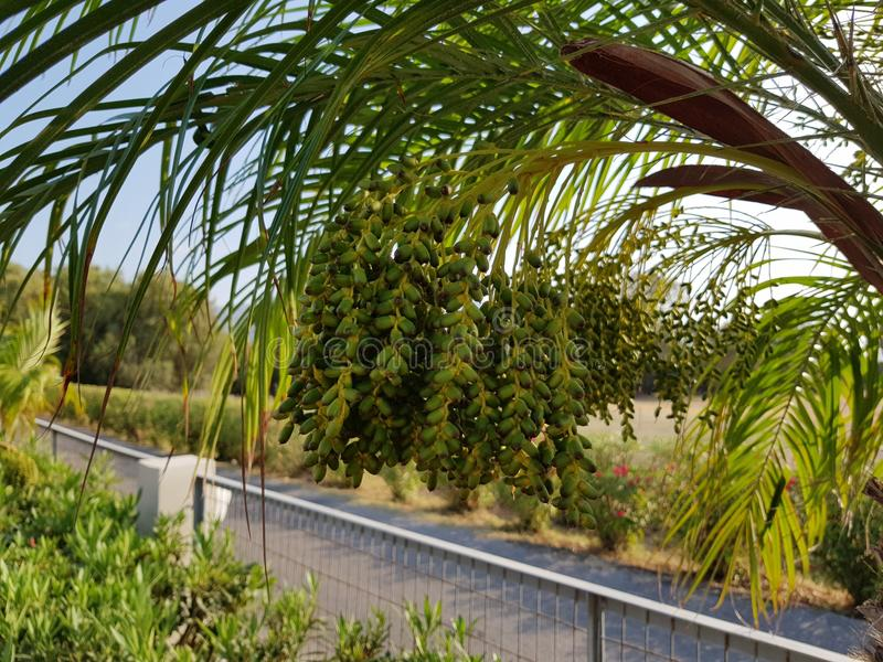 En palmträd arkivfoton