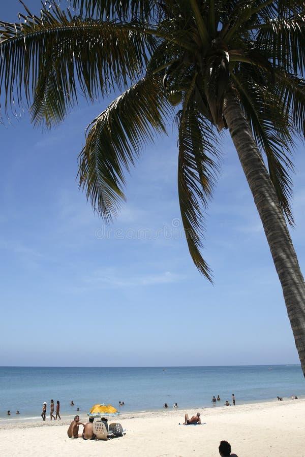 en palmträd royaltyfri fotografi