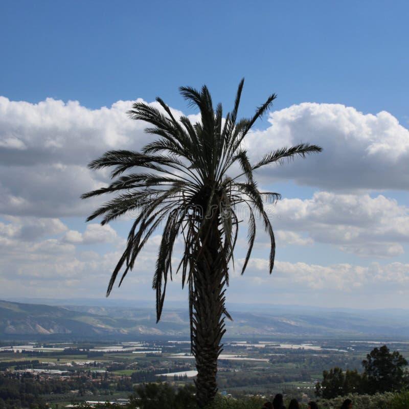 En palmträd royaltyfri bild