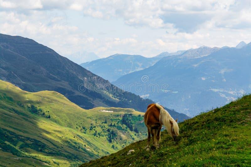 En palominohäst som matar på sidan av ett berg under summ arkivfoton