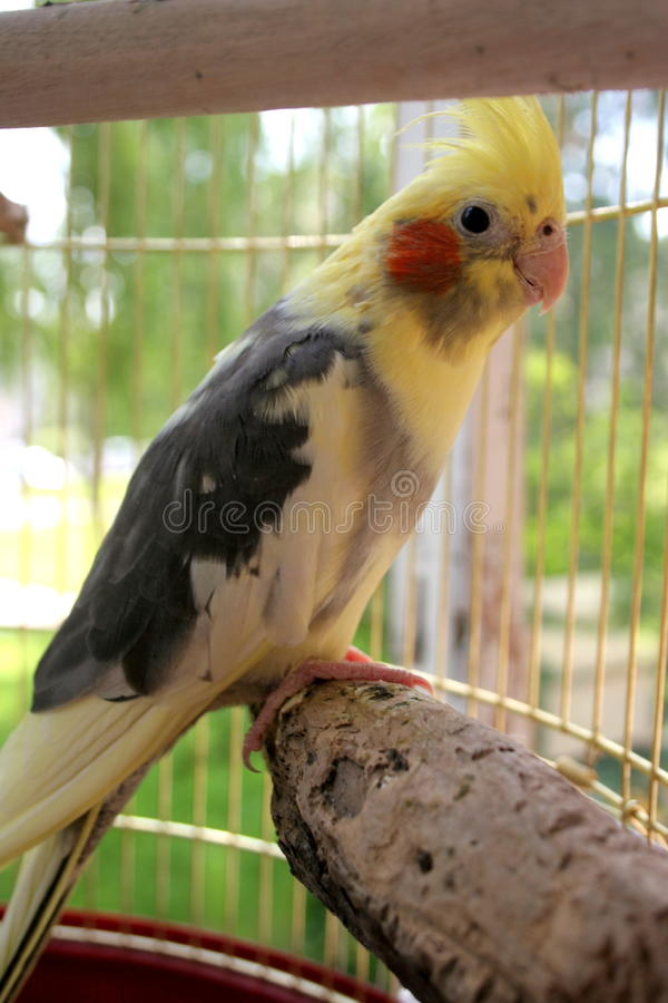 En papegoja arkivfoton