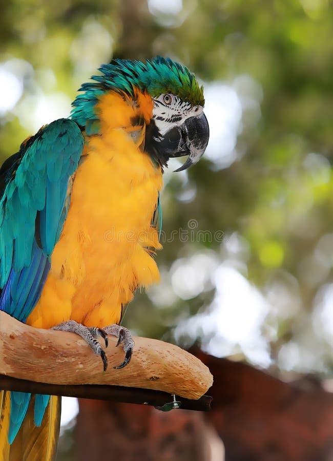 En papegoja på en trädstam royaltyfria foton
