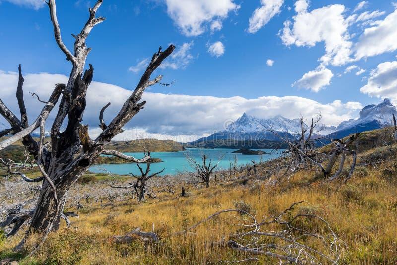 En parc national de Torres del Paine, Patagonia, Chili, Lago del Pehoe photos libres de droits