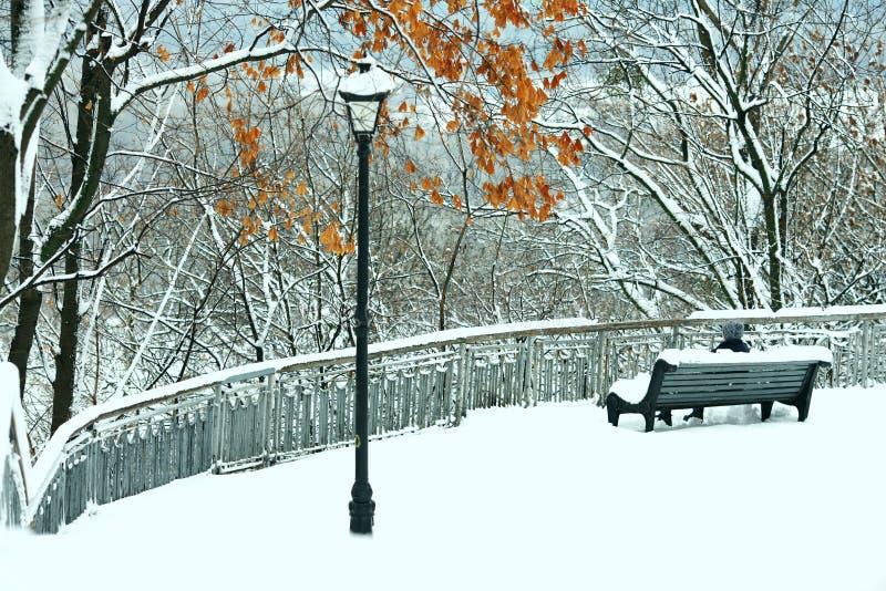 En parque de la ciudad del invierno con los árboles foto de archivo libre de regalías