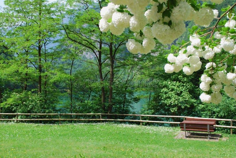 En parque en la costa del lago de la montaña. fotos de archivo libres de regalías