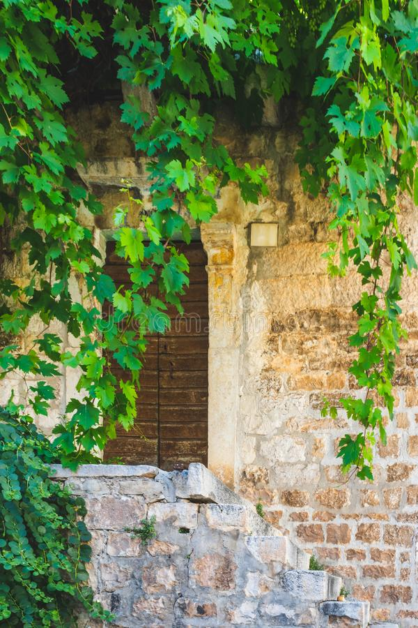 En pergola av druvavinrankor över en dörringång till ett gammalt stenar huset i Dalmatia, i Kroatien, Europa arkivfoto