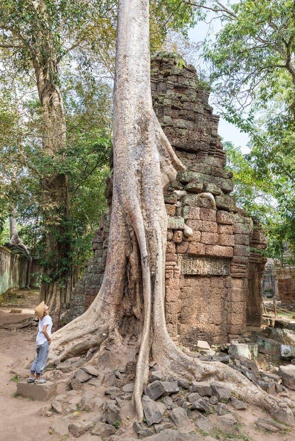 En person som ser det ber?mda djungeltr?det f?r Ta Prohm, rotar att omfamna Angkor tempel, h?mnd av naturen mot m?nskliga byggnad royaltyfri bild