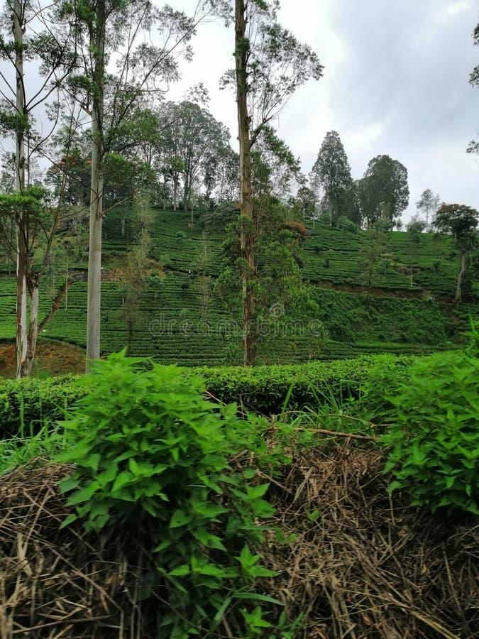 En pic av en härlig berghil på nuwaraeliyaen, Sri Lanka royaltyfri foto