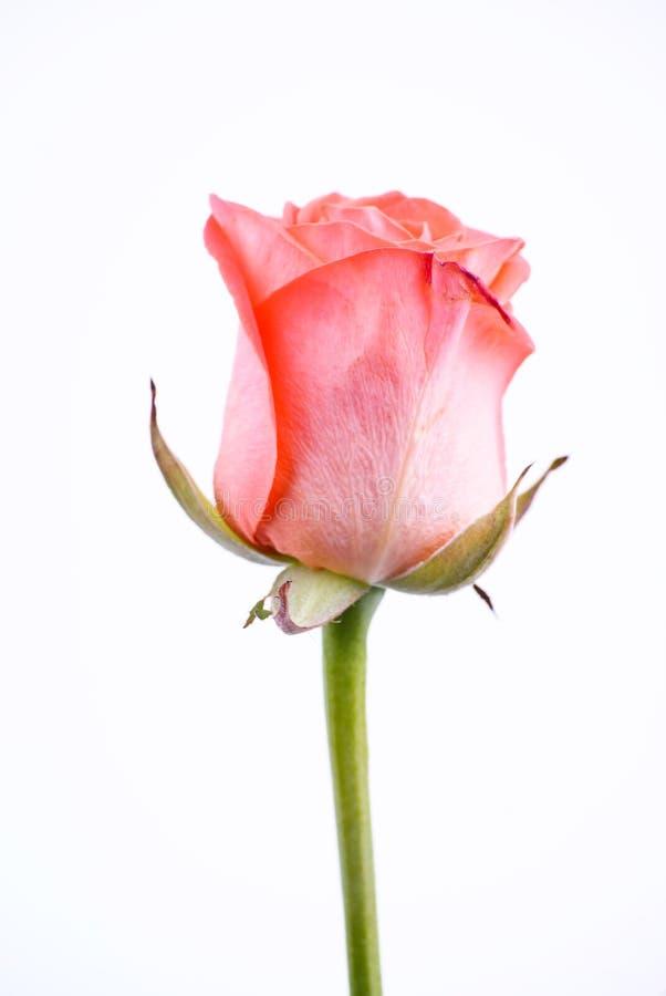 Download En pink steg arkivfoto. Bild av avstånd, profil, steg - 19789230