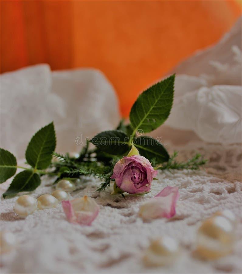 en pink steg fotografering för bildbyråer