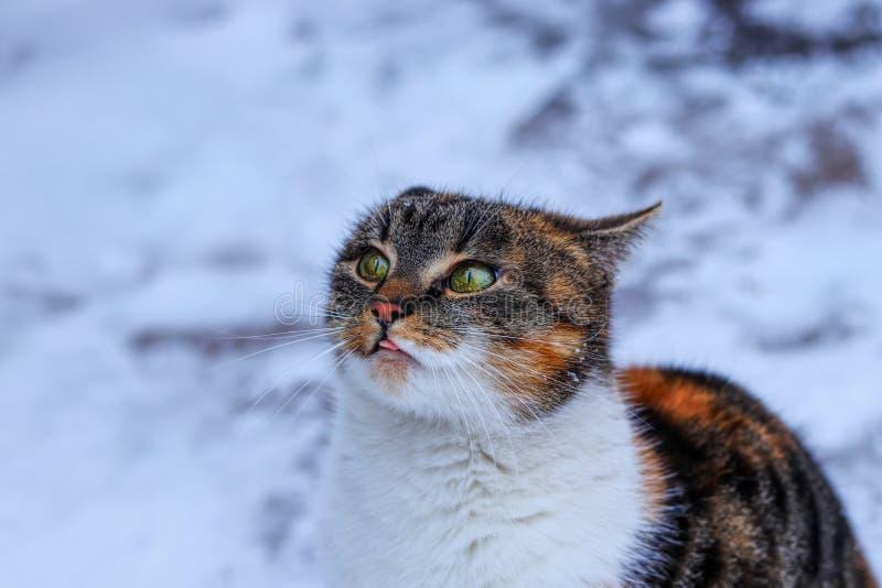 En plädera blick av den inhemska katten Ge mig som någon mat behar En inhemsk katt som sitter för mig och att tigga mig för mat arkivfoton