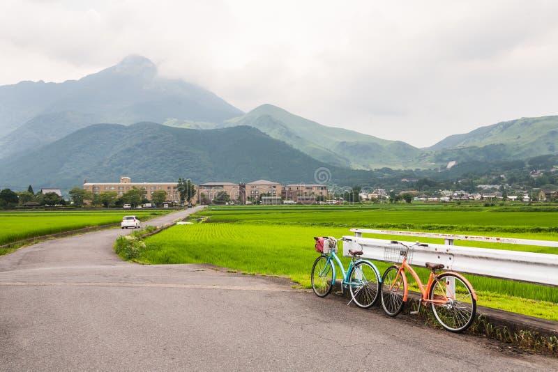 En plats av den gröna risfältet korsade vid en lantlig väg fotografering för bildbyråer