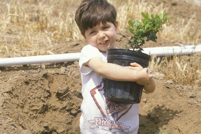 En pojke som rymmer ett träd som ska planteras på jorddag royaltyfria bilder