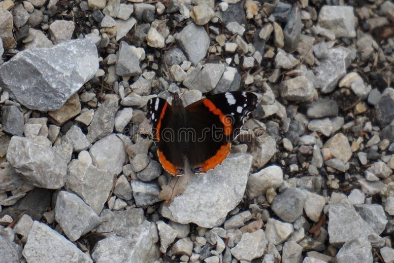 En primavera, la mariposa está tomando el sol en el sol que se sienta en una piedra fotos de archivo