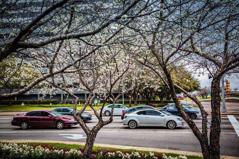 En primavera los perales están floreciendo en las calles imágenes de archivo libres de regalías