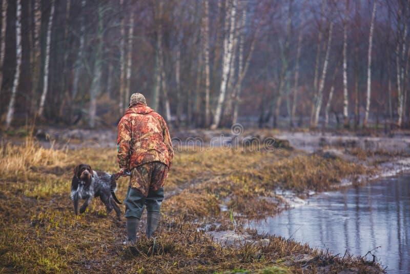 En process av jakt under jaktsäsong, process av andjakt, grupp av jägare och drathaar tysk wirehaired pekarehund fotografering för bildbyråer