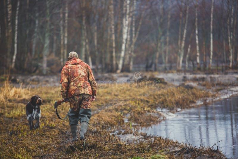 En process av jakt under jaktsäsong, process av andjakt, grupp av jägare och drathaar tysk wirehaired pekarehund arkivbilder