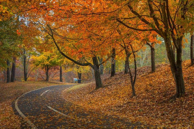 En promenad i Newtown parkerar arkivfoto