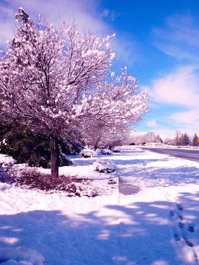 En purpurfärgad vinter royaltyfri foto