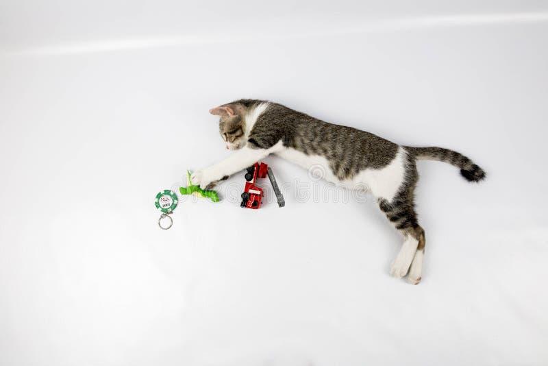 En pussykatt fotografering för bildbyråer
