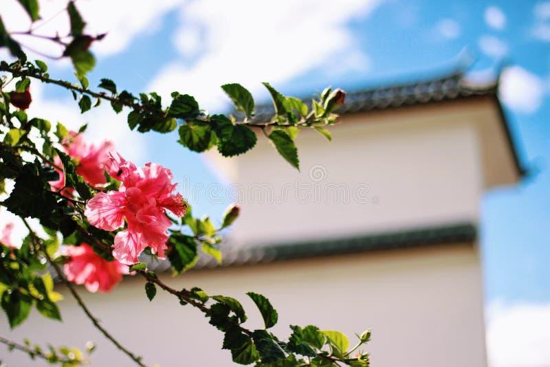 En röd blomma i Kina arkivbild