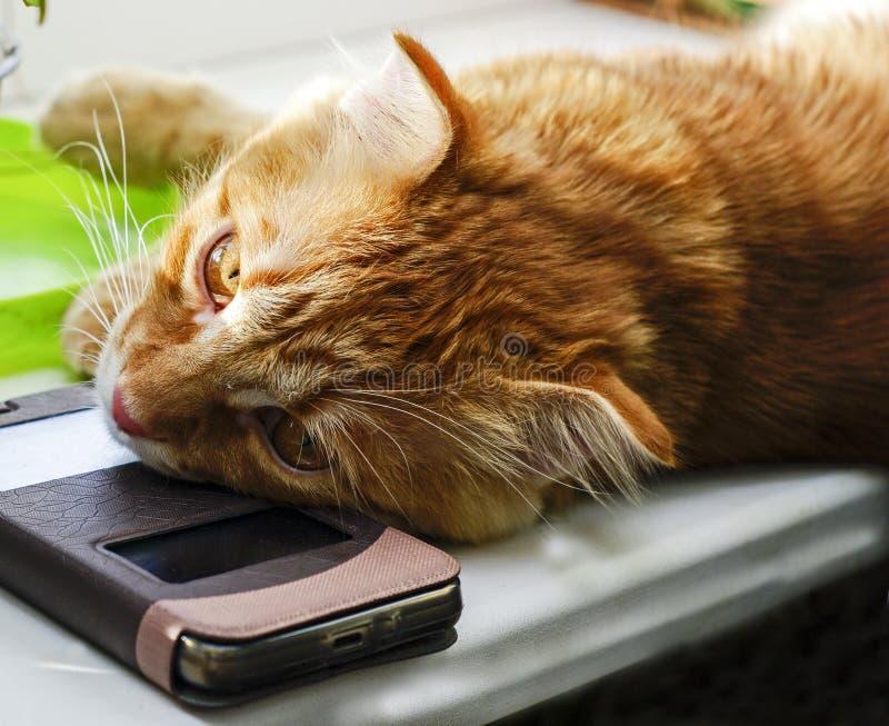 En röd katt ligger med en smartphone under hans huvud royaltyfria bilder