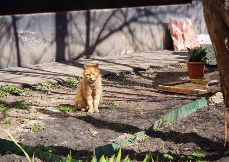 En röd katt sitter på gatan arkivfoton