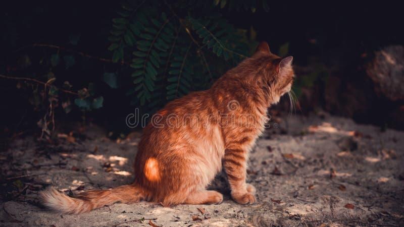 En röd katt sitter på stranden arkivbilder