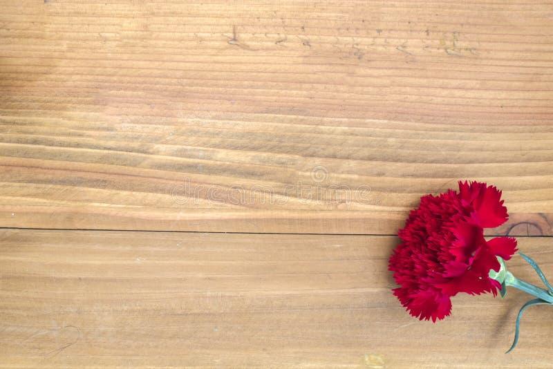en röd nejlika på en trätabell royaltyfria bilder