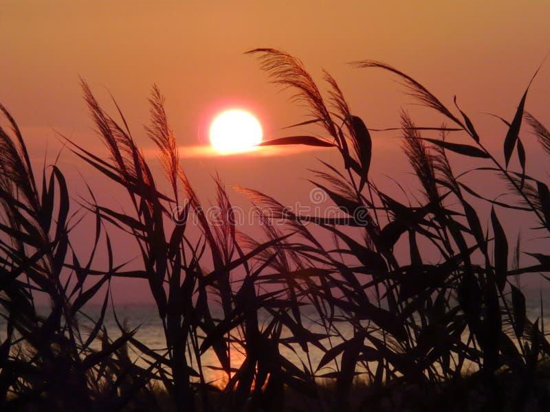 En röd skiva av inställningssolen som rullar över horisonten Mot bakgrunden av gräset som svänger under en ljus vind royaltyfria bilder