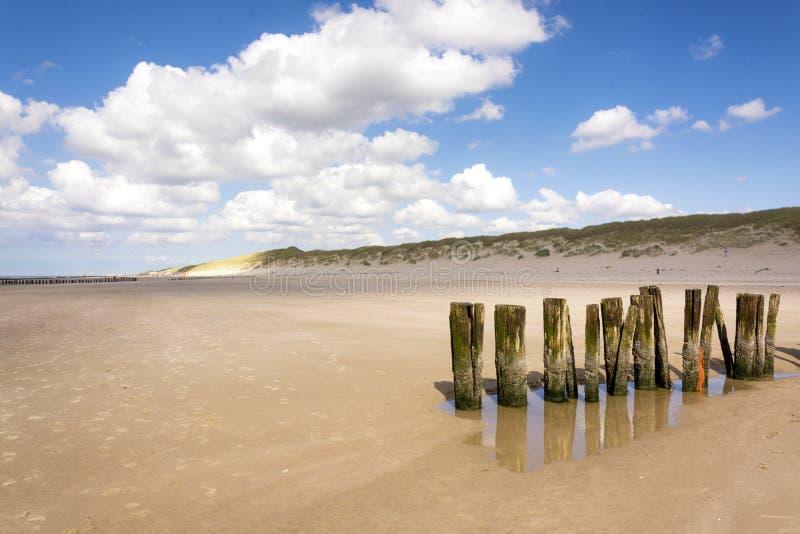 En rad av strandpollare på stranden av Schoorl, norr Holland, Nederländerna royaltyfri foto