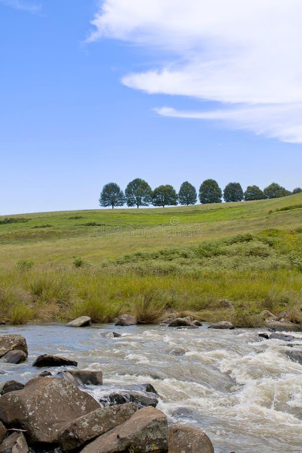 En rad av träd ovanför Karkloof nedgångar royaltyfri foto