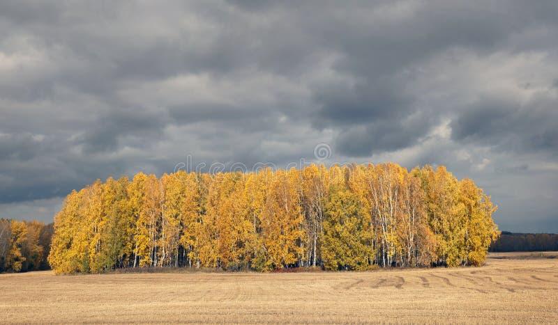 En rad av träd på kanten av ett fält i hösten royaltyfria bilder