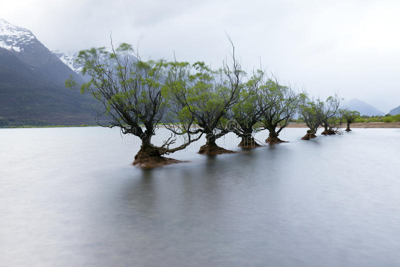 En rad av viden på Glenorchy, Nya Zeeland royaltyfri bild