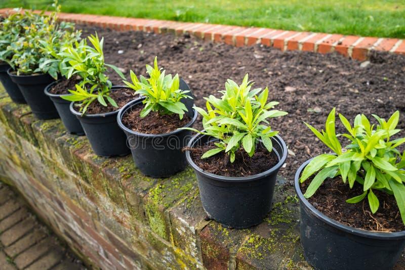En rad unga gröna växter i krukor på en vintage väderträdgårdsvägg som är klar för plantering i tegelstenen arkivfoto