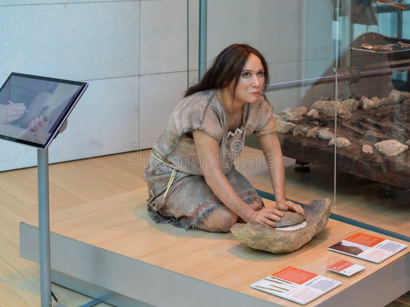 En realistisk reproduktion av en förhistorisk kvinna i permanenteutställningen av den berömda vetenskapen royaltyfri foto