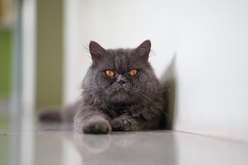 En reflexion av den lata katten royaltyfria foton