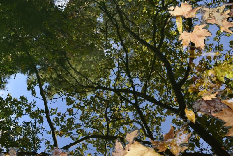En reflexion av himlen och försöken arkivbilder