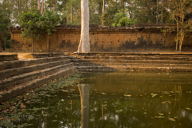 En reflexion för träd` s i en pöl av vatten vid en forntida vägg i Angkor Thom royaltyfri fotografi