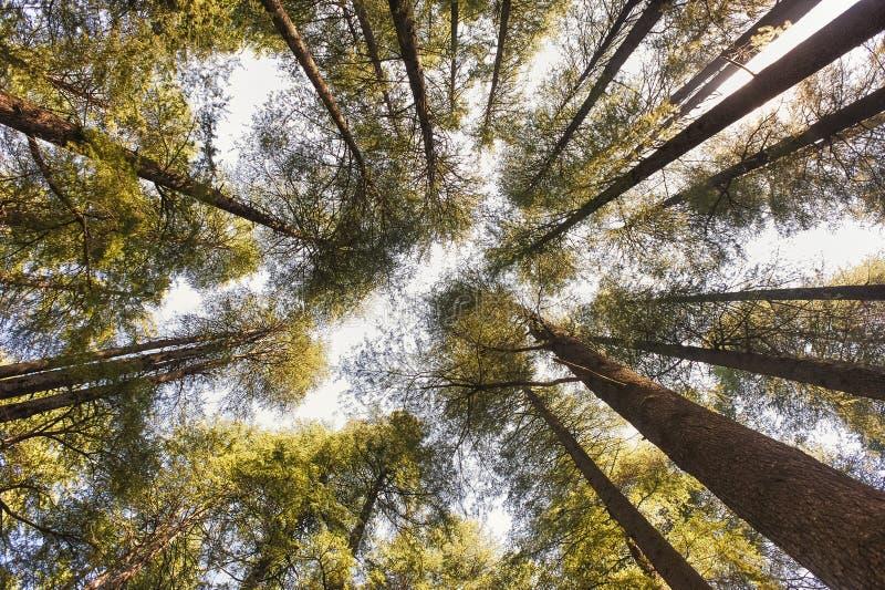 En regardant vers le ciel à travers les arbres photographie stock libre de droits