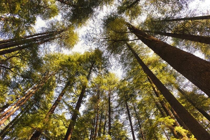 En regardant vers le ciel à travers les arbres image stock