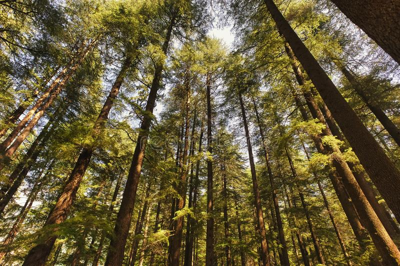 En regardant vers le ciel à travers les arbres images libres de droits