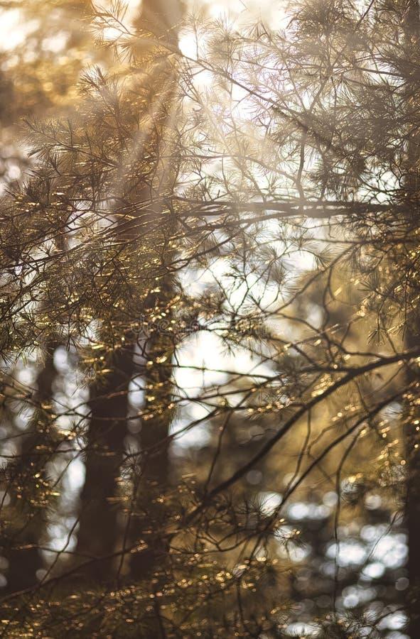En regardant vers le ciel à travers les arbres images stock