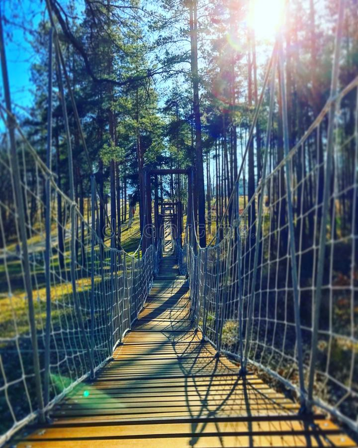 En repbro i en skog arkivbilder