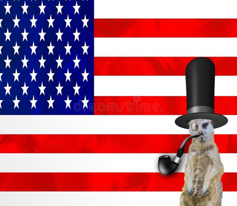 En rolig flott meerkat som bär en bästa hatt som röker röret och bär ett monokelexponeringsglas som isoleras på amerikanska flagg stock illustrationer