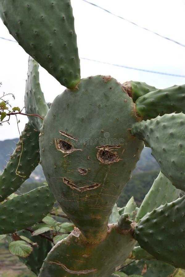 En rolig kaktusväxt med en framsida arkivbild