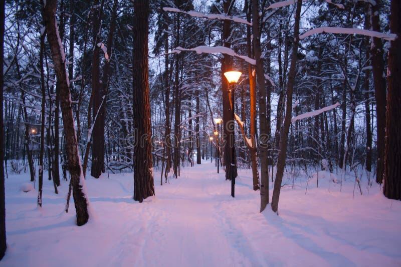 En romantisk vinterafton i parkerar royaltyfria foton