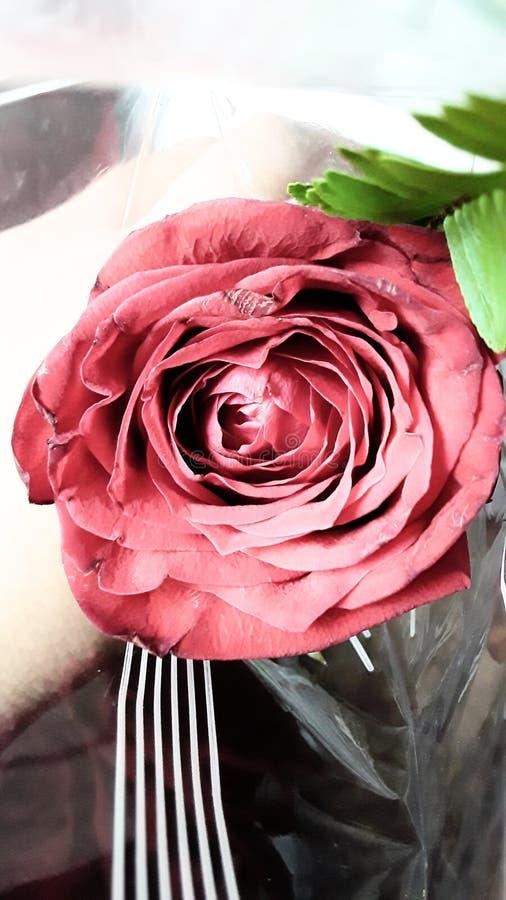 En ros för aum steg arkivfoto