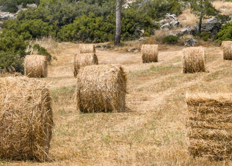 En rund bal av sugrör för djur matning Foder för boskap Naturligt jordbruks- landskap av Cypern royaltyfria foton