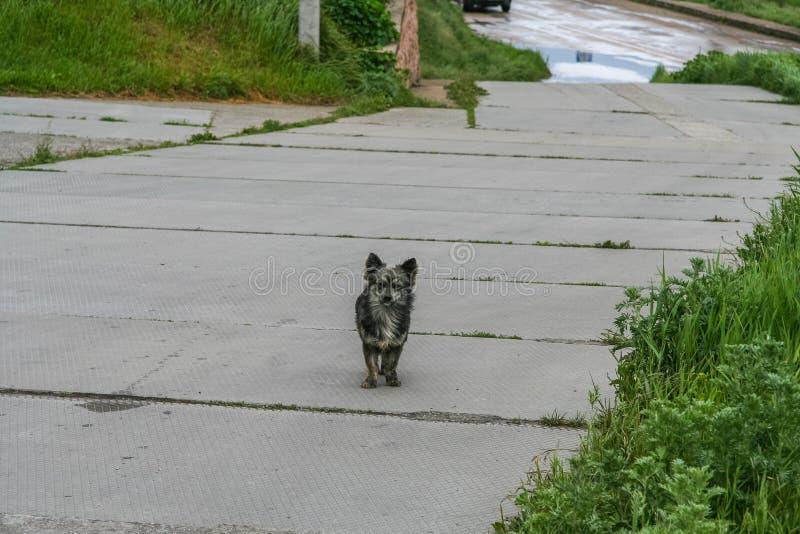 En ruskig farlig hund arkivbild